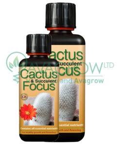 Cactus Focus Family