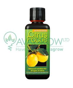 Citrus Focus 300ML