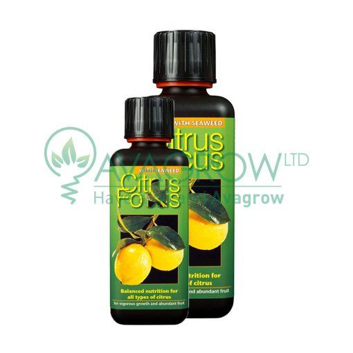 Citrus Focus Family