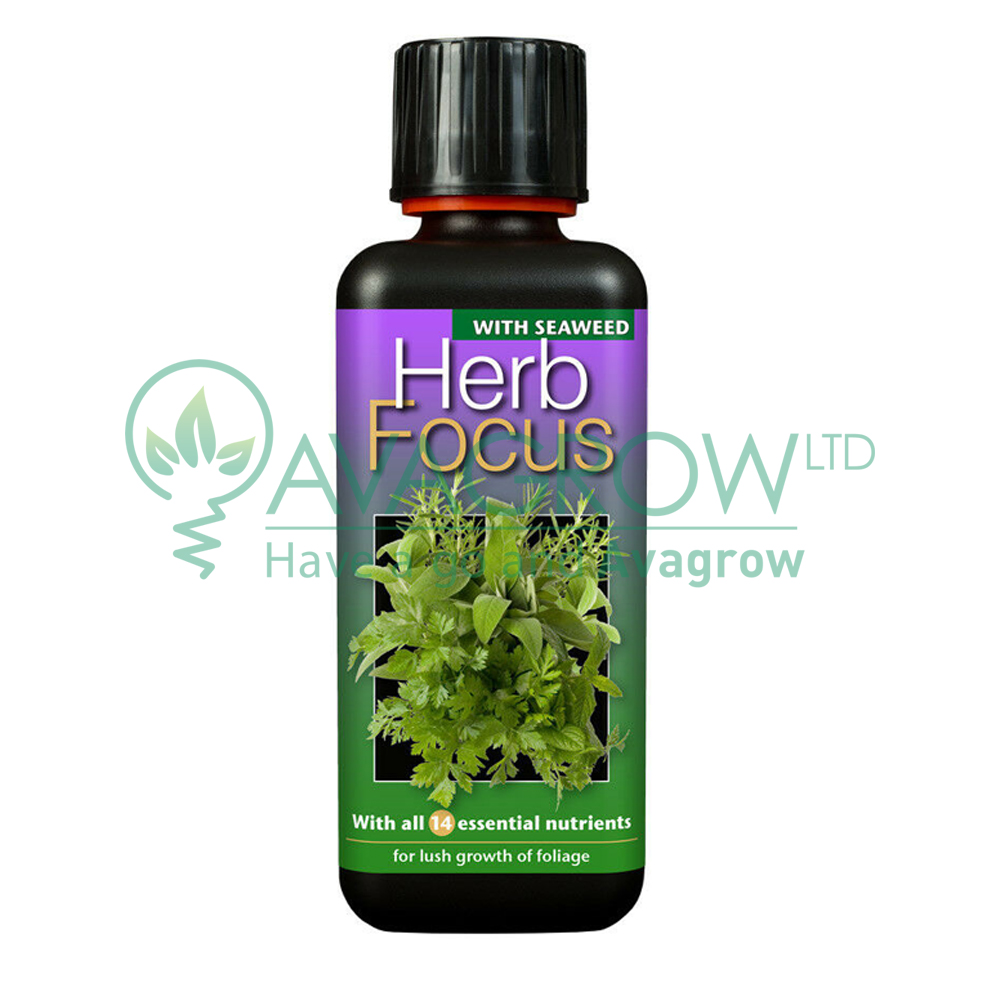 Herb Focus 300ML