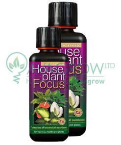 House Plant Focus Family
