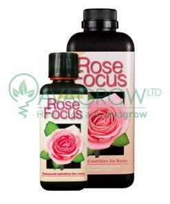 Rose Focus Family