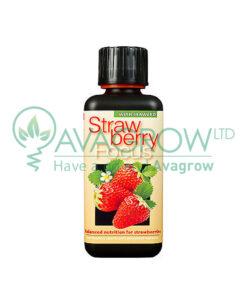 Strawberry Focus 100ML