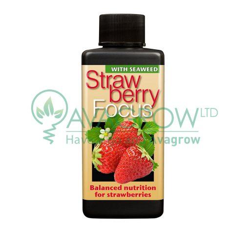 Strawberry Focus 300ML