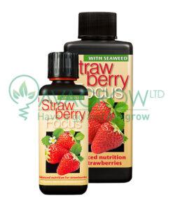 Strawberry Focus Family