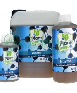 Plant Magic Enzyme Family