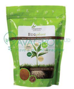 Big Plant 500g